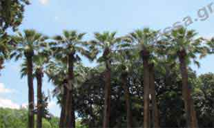 _Palm trees in National Garden.