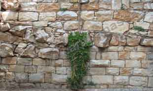_Wall in National Garden.